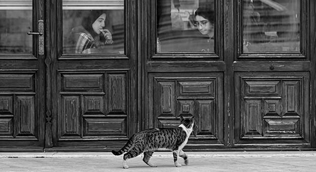 Zeytinburnu'nu 'En İyi Anlatan' Fotoğraflar Belli Oldu