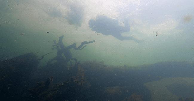 Düden'e dalış yaptılar 'balıklar tamamen ölmüş' dediler